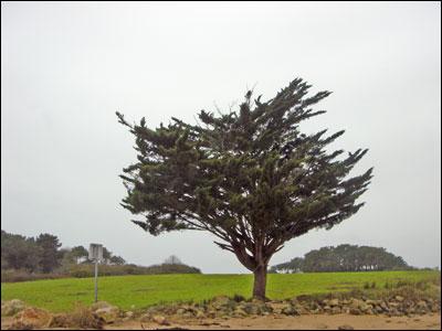 Un arbre seul au milieu d'un semblant d'île. Morbihan, février 2007.