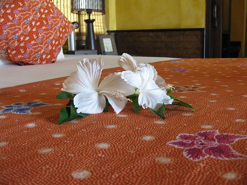 Thaïlande, janvier 2009